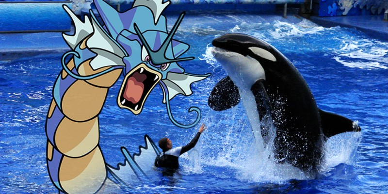 Pokemon_dragon_Orca_Whale_at_Seaworld_