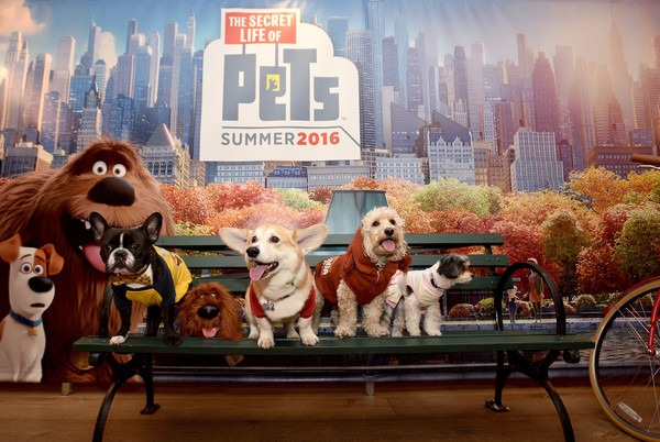 Secret Life of pets park bench