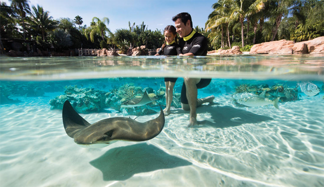Discovery Cove Ticket Opens Doors For Florida Residents