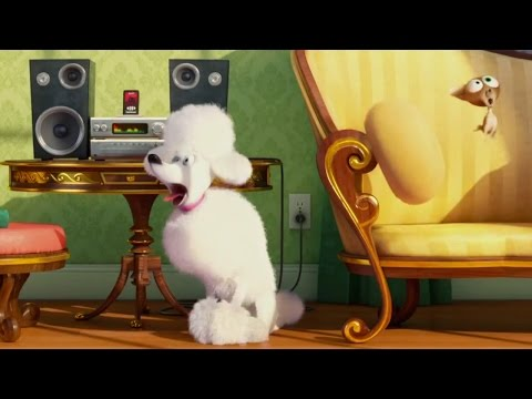 secret life of pets singing poodle YMt0Fx